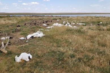A severe hailstorm killed more than 11,000 birds at Big Lake Wildlife Management Area