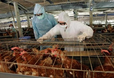 'DISEASE X': New Strain Of Bird Flu Kills 40% Of Those Who Contract, 100s Dead In China